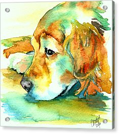 Golden Retriever Profile Acrylic Print by Christy  Freeman