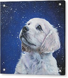 Golden Retriever Pup In Snow Acrylic Print