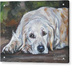 Golden Retriever Resting Acrylic Print by Lee Ann Shepard