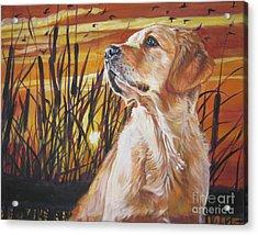 Golden Retriever Sunset Acrylic Print by Lee Ann Shepard