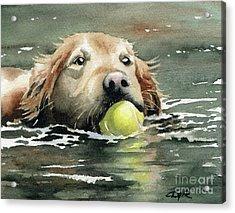 Golden Retriever Swimming Acrylic Print