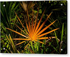 Golden Saw Palmetto Acrylic Print