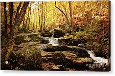 Golden Serenity Acrylic Print by Rebecca Davis