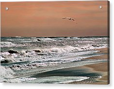 Acrylic Print featuring the photograph Golden Shore by Steve Karol