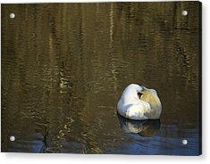 Golden Slumber Acrylic Print by Elsa Marie Santoro