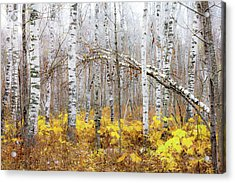 Acrylic Print featuring the photograph Golden Slumbers by Mary Amerman