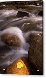 Golden Stream Acrylic Print