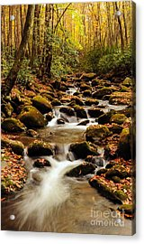 Acrylic Print featuring the photograph Golden Stream In The Great Smoky Mountains by Debbie Green