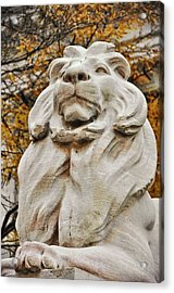 Golden Lion Strength Acrylic Print by JAMART Photography