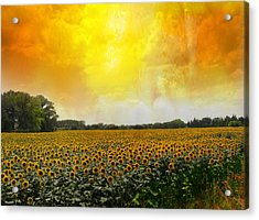 Golden Sunflowers Of Nimes Acrylic Print by Melvin Kearney