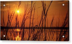 Golden Sunset At The Lake Acrylic Print by John Williams