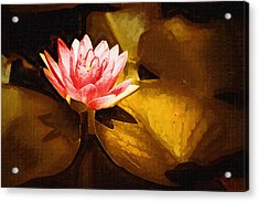 Golden Swamp Flower Acrylic Print by Paul Bartoszek