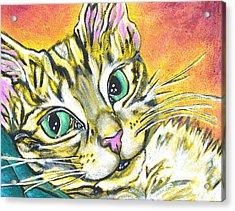 Golden Tabby Acrylic Print