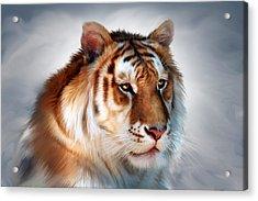 Golden Tiger Acrylic Print by Julie L Hoddinott