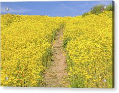Acrylic Print featuring the photograph Golden Trail by Marc Crumpler