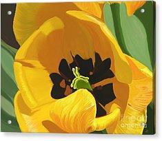 Golden Tulip Acrylic Print