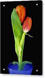 Golden Tulips Acrylic Print by Daniel D Miller