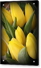 Golden Tulips Acrylic Print