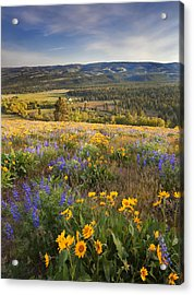 Golden Valley Acrylic Print by Mike  Dawson