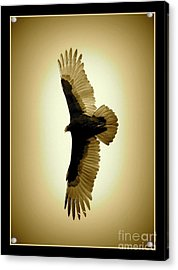 Golden-winged Vulture Acrylic Print by Carol Groenen