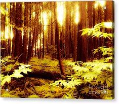Golden Woods Acrylic Print