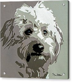 Goldendoodle Acrylic Print by Slade Roberts