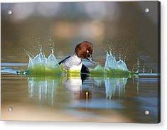 Goldeneye Acrylic Print by Thy Bun