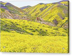 Acrylic Print featuring the photograph Goldfields And Temblor Hills by Marc Crumpler