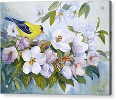 Goldfinch And Crabapple Blossoms Acrylic Print