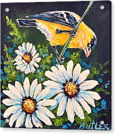 Goldfinch And Daisy Acrylic Print by Gail Butler