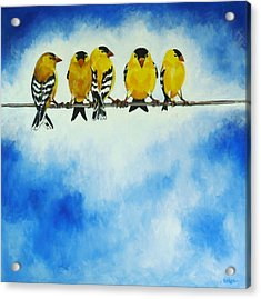 Goldfinch On A Wire Acrylic Print