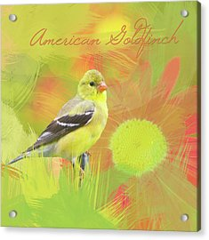 Acrylic Print featuring the photograph Goldfinch Watercolor Photo by Heidi Hermes