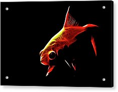 Goldfish 2 Acrylic Print by Tilly Williams