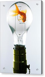 Goldfish In Light Bulb  Acrylic Print