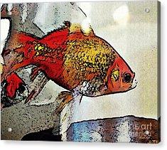 Goldfish Acrylic Print by Sarah Loft