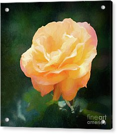 Good As Gold Painted Rose Acrylic Print
