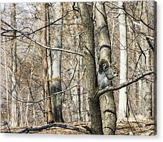 Good Day For Eating Acrylic Print by Jose Rojas