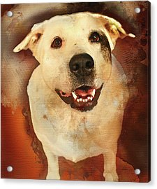 Good Dog Acrylic Print by Bellesouth Studio