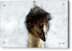 Good Morning Beautiful  Acrylic Print by Steven Digman
