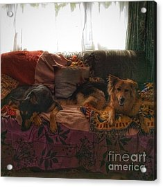 Good Morning From The Puppies!  #dogs Acrylic Print
