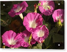 Acrylic Print featuring the photograph Good Morning, Glory by Sheila Brown