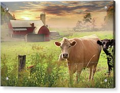 Acrylic Print featuring the photograph Good Morning by Lori Deiter