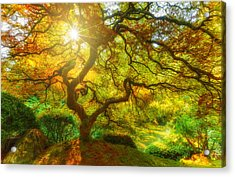 Good Morning Sunshine Acrylic Print by Darren  White