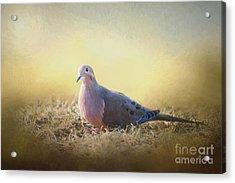 Good Mourning Dove Acrylic Print