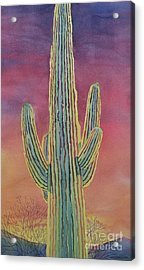 Good Night Cactus Wren Acrylic Print