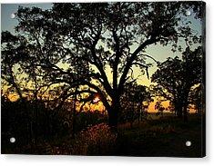 Acrylic Print featuring the photograph Good Night Tree by Viviana  Nadowski