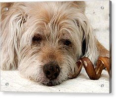 Acrylic Print featuring the photograph Goodbye Old Friend by Laura Wong-Rose