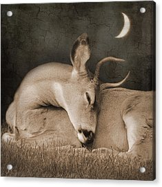 Acrylic Print featuring the photograph Goodnight Deer by Sally Banfill