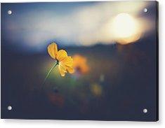 Acrylic Print featuring the photograph Goodnight Sun by Shane Holsclaw