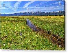 Acrylic Print featuring the photograph Goodrich Creek by James Eddy